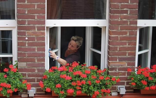 květiny na oknech